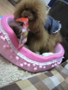 愛犬鈴ちゃん~トイプードル☆ライフスタイル~-2012041217480000.jpg