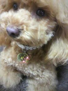 愛犬鈴ちゃん~トイプードル☆ライフスタイル~-2012041317550001.jpg