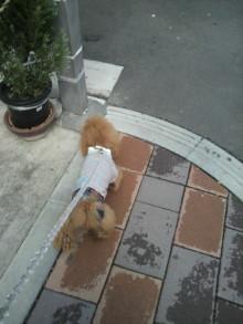 愛犬鈴ちゃん~トイプードル☆ライフスタイル~-2012041509400000.jpg