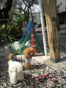 愛犬鈴ちゃん~トイプードル☆ライフスタイル~-2012041510190001.jpg