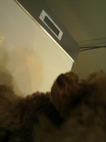 愛犬鈴ちゃん~トイプードル☆ライフスタイル~-2012042115110000.jpg