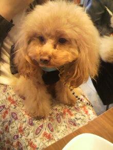 愛犬鈴ちゃん~トイプードル☆ライフスタイル~-2012042312540003.jpg