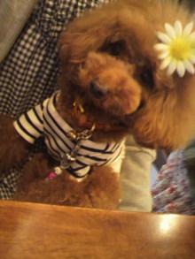 愛犬鈴ちゃん~トイプードル☆ライフスタイル~-2012042312540000.jpg