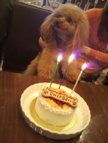 愛犬鈴ちゃん~トイプードル☆ライフスタイル~-2012042314430000.jpg