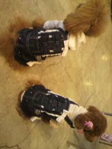 愛犬鈴ちゃん~トイプードル☆ライフスタイル~-2012042314340001.jpg