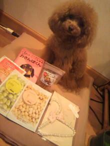 愛犬鈴ちゃん~トイプードル☆ライフスタイル~-2012042319330000.jpg