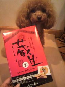 愛犬鈴ちゃん~トイプードル☆ライフスタイル~-2012042319360000.jpg