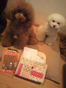 愛犬鈴ちゃん~トイプードル☆ライフスタイル~-2012042319370000.jpg