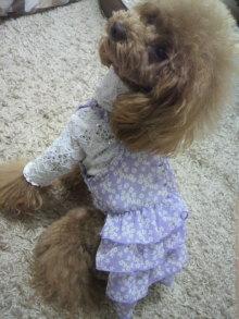 愛犬鈴ちゃん~トイプードル☆ライフスタイル~-2012042611220000.jpg