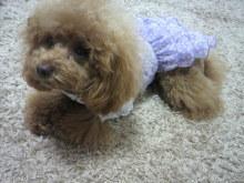 愛犬鈴ちゃん~トイプードル☆ライフスタイル~-2012042611220001.jpg
