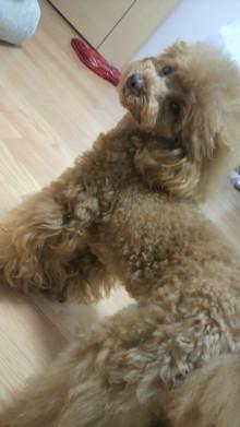 愛犬鈴ちゃん~トイプードル☆ライフスタイル~-2012042716390001.jpg