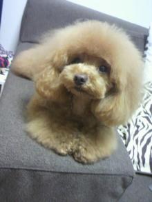 愛犬鈴ちゃん~トイプードル☆ライフスタイル~-2012042718440000.jpg