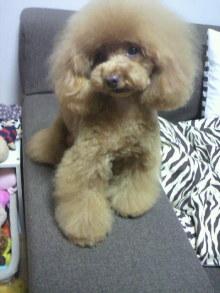 愛犬鈴ちゃん~トイプードル☆ライフスタイル~-2012042718470000.jpg