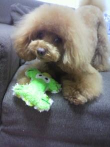 愛犬鈴ちゃん~トイプードル☆ライフスタイル~-2012042718580002.jpg