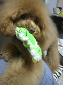 愛犬鈴ちゃん~トイプードル☆ライフスタイル~-2012042718590001.jpg