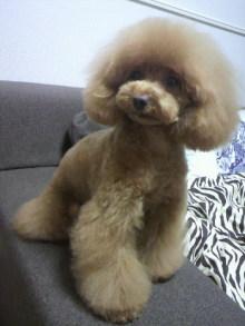 愛犬鈴ちゃん~トイプードル☆ライフスタイル~-2012042718480001.jpg