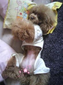 愛犬鈴ちゃん~トイプードル☆ライフスタイル~-2012043009110000.jpg