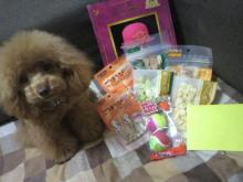 愛犬鈴ちゃん~トイプードル☆ライフスタイル~-2012042817270000.jpg
