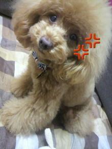 愛犬鈴ちゃん~トイプードル☆ライフスタイル~-2012042817290002.jpg