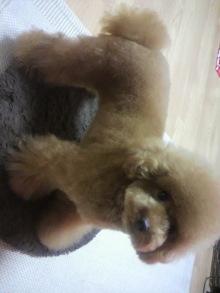 愛犬鈴ちゃん~トイプードル☆ライフスタイル~-2011081422530000.jpg