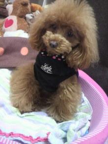 愛犬鈴ちゃん~トイプードル☆ライフスタイル~-2012050208090000.jpg