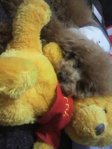 愛犬鈴ちゃん~トイプードル☆ライフスタイル~-2012050223200001.jpg