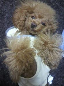 愛犬鈴ちゃん~トイプードル☆ライフスタイル~-2012050223300001.jpg