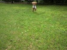 愛犬鈴ちゃん~トイプードル☆ライフスタイル~-2012050409380000.jpg