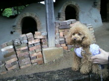 愛犬鈴ちゃん~トイプードル☆ライフスタイル~-2012050411290000.jpg