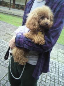 愛犬鈴ちゃん~トイプードル☆ライフスタイル~-2012050411290001.jpg
