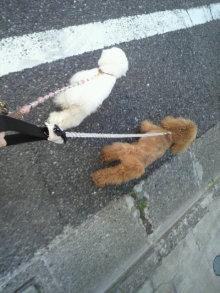 愛犬鈴ちゃん~トイプードル☆ライフスタイル~-2012050517070000.jpg
