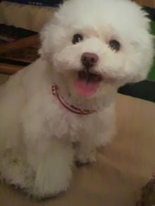 愛犬鈴ちゃん~トイプードル☆ライフスタイル~-2012050517310000.jpg
