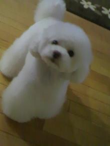 愛犬鈴ちゃん~トイプードル☆ライフスタイル~-2012050523490000.jpg