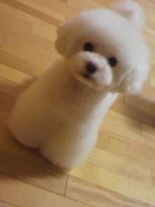 愛犬鈴ちゃん~トイプードル☆ライフスタイル~-2012050523490002.jpg