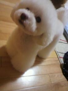 愛犬鈴ちゃん~トイプードル☆ライフスタイル~-2012050523490003.jpg