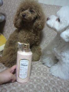 愛犬鈴ちゃん~トイプードル☆ライフスタイル~-2012050522310000.jpg