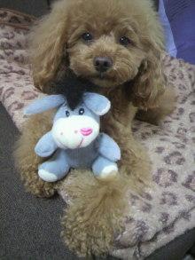 愛犬鈴ちゃん~トイプードル☆ライフスタイル~-2012050715250001.jpg