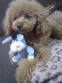 愛犬鈴ちゃん~トイプードル☆ライフスタイル~-2012050715250002.jpg