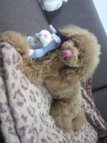 愛犬鈴ちゃん~トイプードル☆ライフスタイル~-2012050715260000.jpg