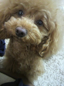 愛犬鈴ちゃん~トイプードル☆ライフスタイル~-2012050715450000.jpg