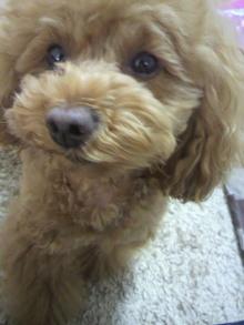 愛犬鈴ちゃん~トイプードル☆ライフスタイル~-2012050715450002.jpg