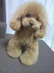 愛犬鈴ちゃん~トイプードル☆ライフスタイル~-2012050718380000.jpg