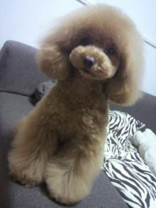 愛犬鈴ちゃん~トイプードル☆ライフスタイル~-2012050719060000.jpg