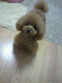 愛犬鈴ちゃん~トイプードル☆ライフスタイル~-2012050719100000.jpg