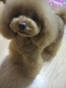愛犬鈴ちゃん~トイプードル☆ライフスタイル~-2012050719100001.jpg