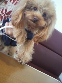 愛犬鈴ちゃん~トイプードル☆ライフスタイル~-2012050813030000.jpg