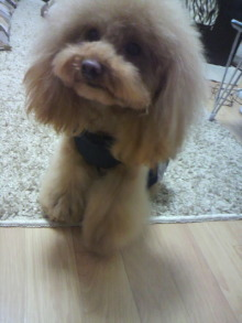 愛犬鈴ちゃん~トイプードル☆ライフスタイル~-2012050815590000.jpg