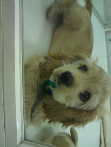 愛犬鈴ちゃん~トイプードル☆ライフスタイル~-2012050816420001.jpg