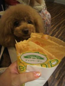 愛犬鈴ちゃん~トイプードル☆ライフスタイル~-2012050818210000.jpg