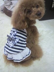 愛犬鈴ちゃん~トイプードル☆ライフスタイル~-2012050913040000.jpg